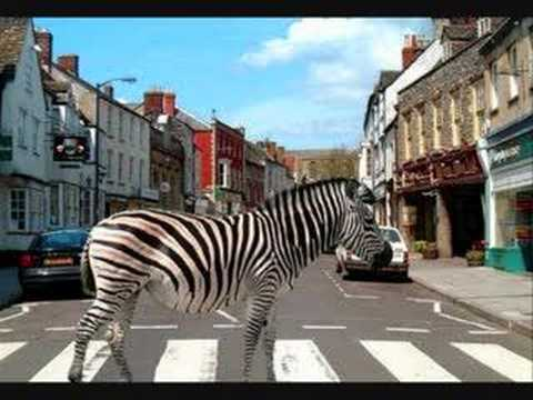 Scooter - '' Zebras Crossing The Street ''